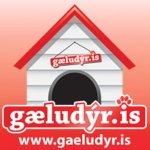 gaeludyr.is